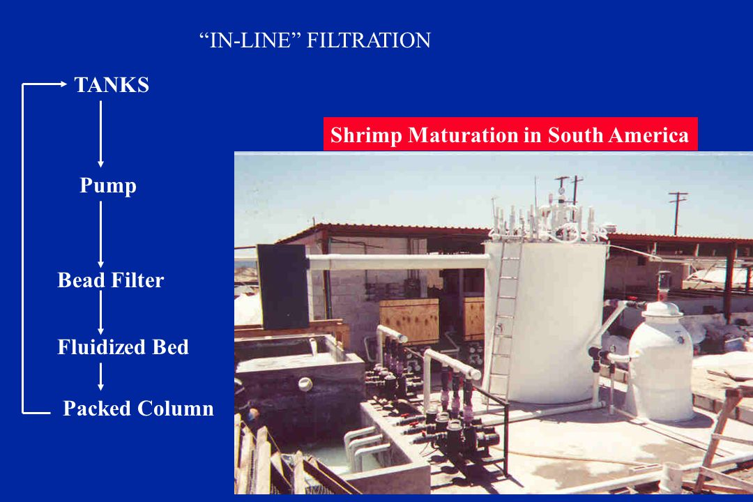 IN-LINE FILTRATION TANKS. Shrimp Maturation in South America. Pump. Bead Filter. Fluidized Bed.
