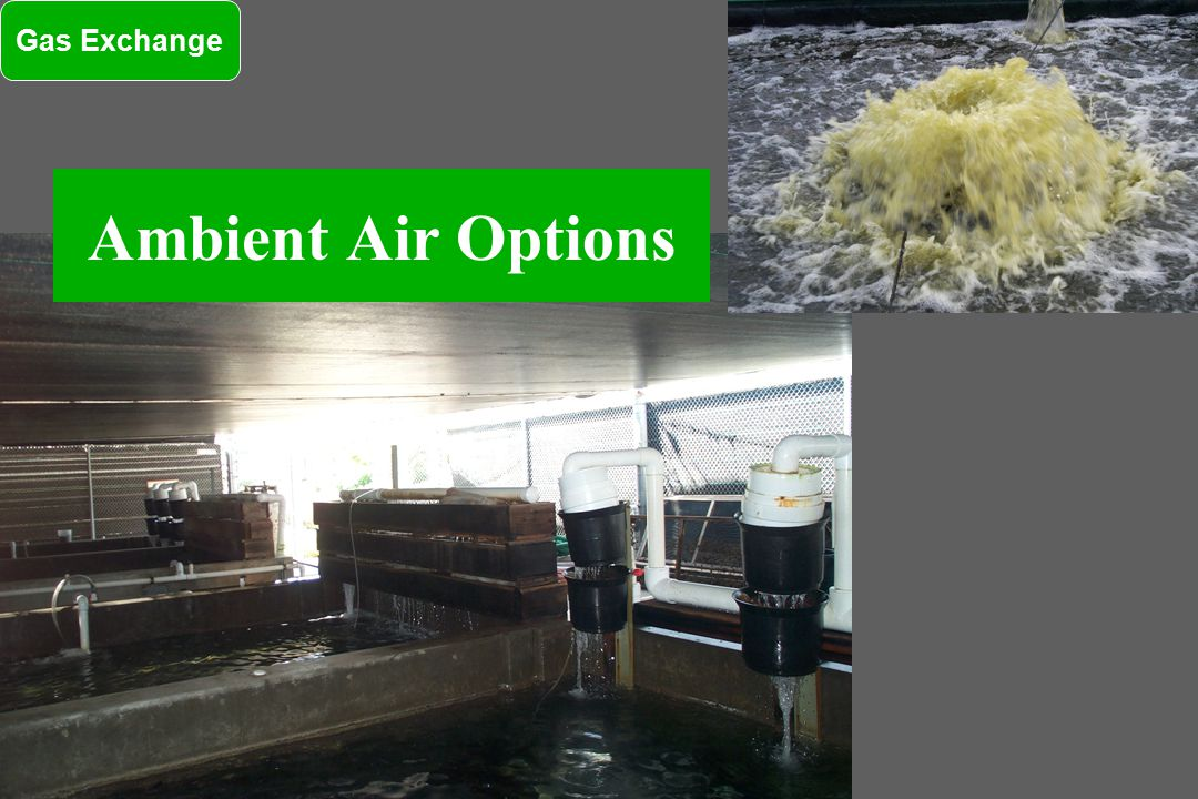 Ambient Air Options Gas Exchange