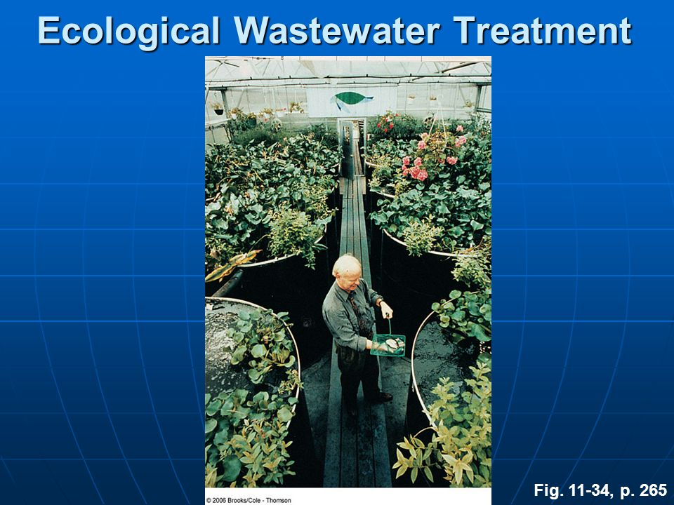 Ecological Wastewater Treatment