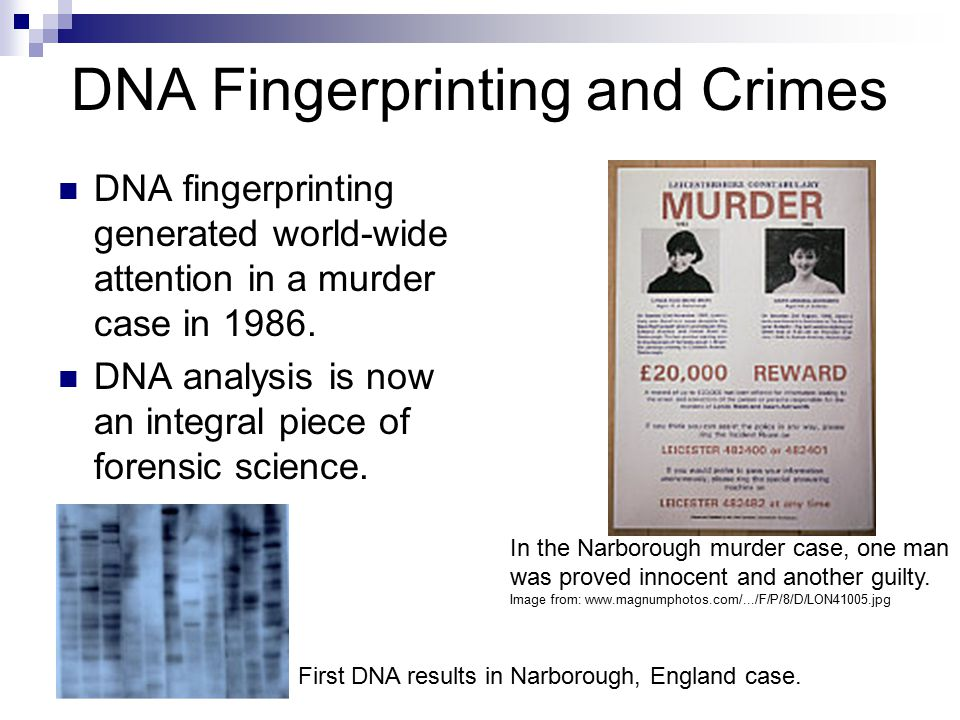 DNA In Forensic Science: A Case Study by Kristine Kerber ...