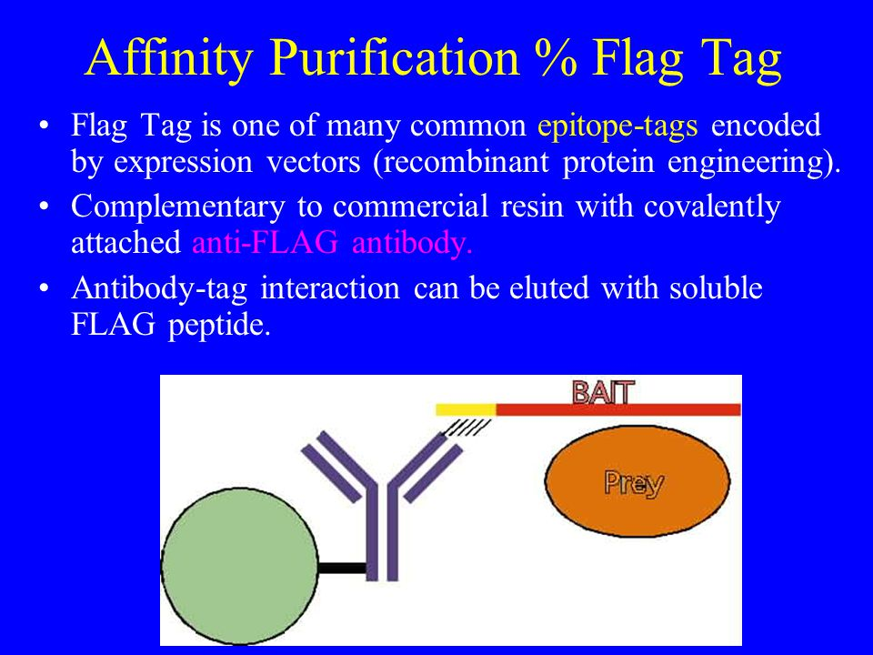 Lecture Two Introduction To Proteomics Ppt Video Online Download