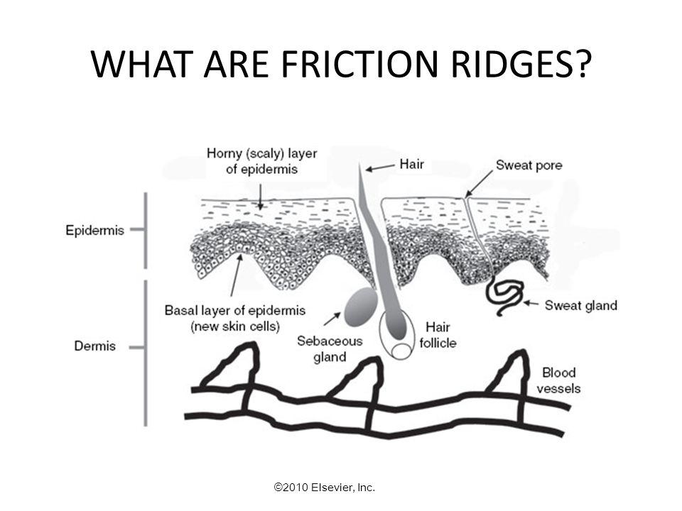 friction ridge skin