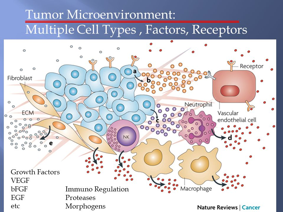 Tumor Microenvironment Review Nature