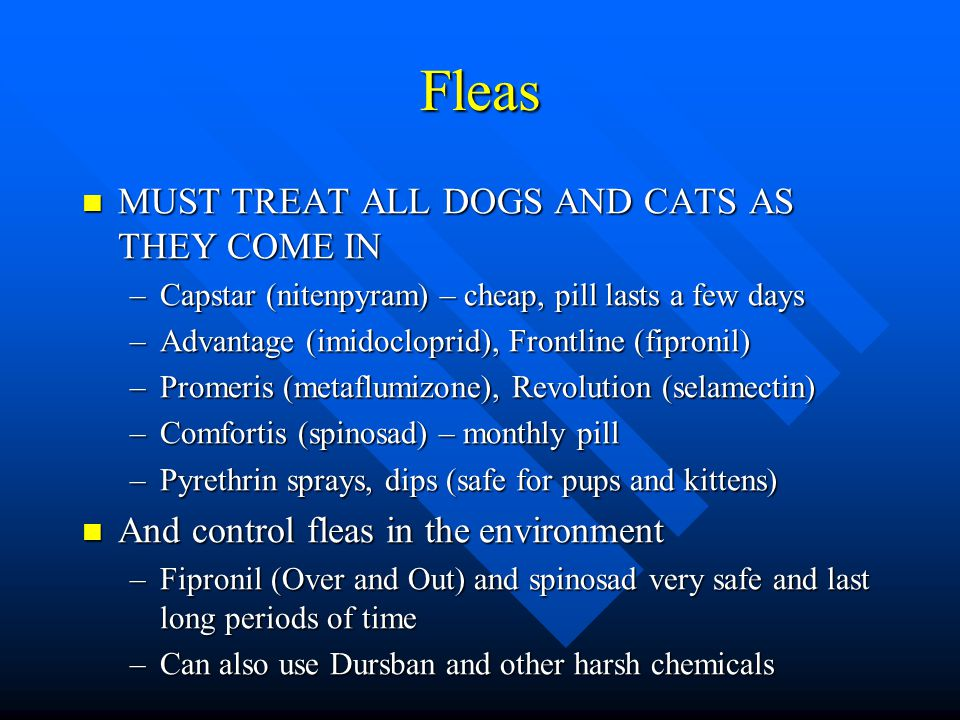 What Pill Works Best To Rid Fleas On Dogs