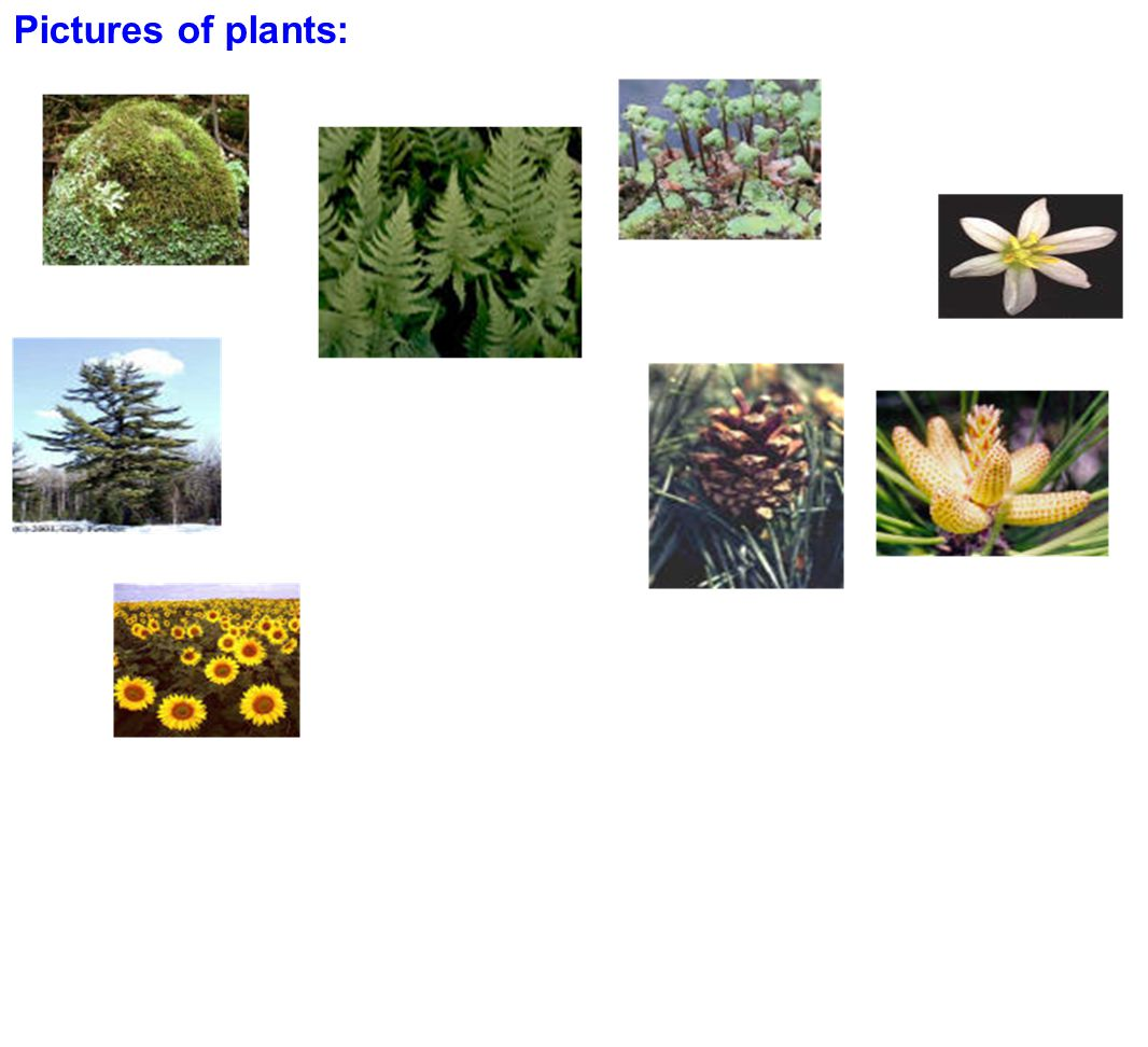 Pictures of plants: