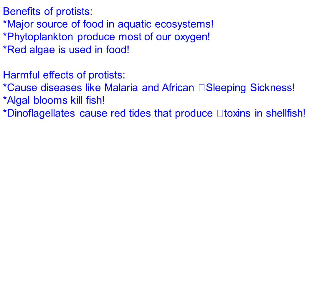 Benefits of protists: *Major source of food in aquatic ecosystems! *Phytoplankton produce most of our oxygen!