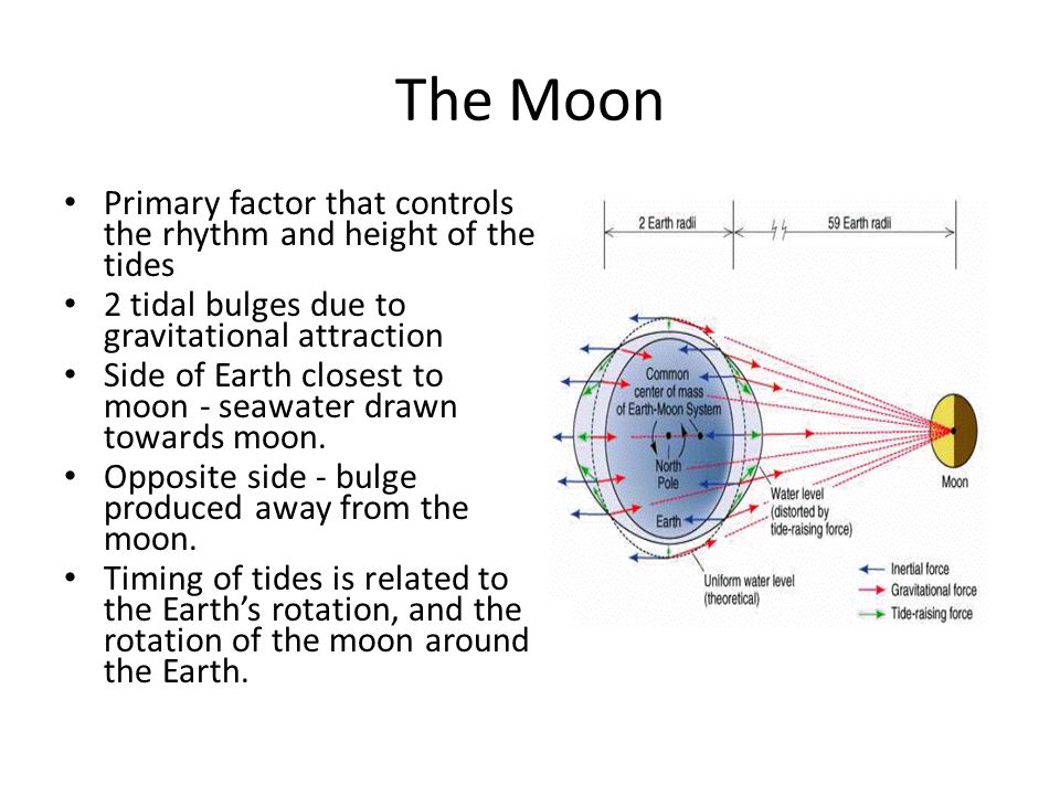 The Moon Primary factor that controls the rhythm and height of the tides. 2 tidal bulges due to gravitational attraction.