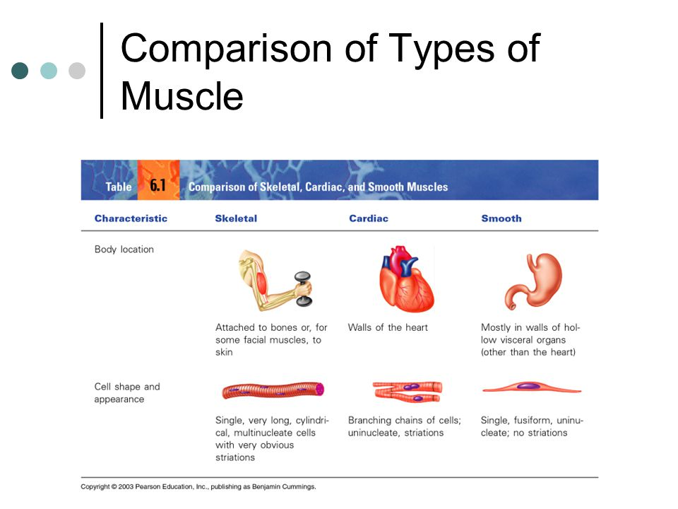 Muscular system muscles are responsible for all types of body 3 comparison of types ccuart Gallery