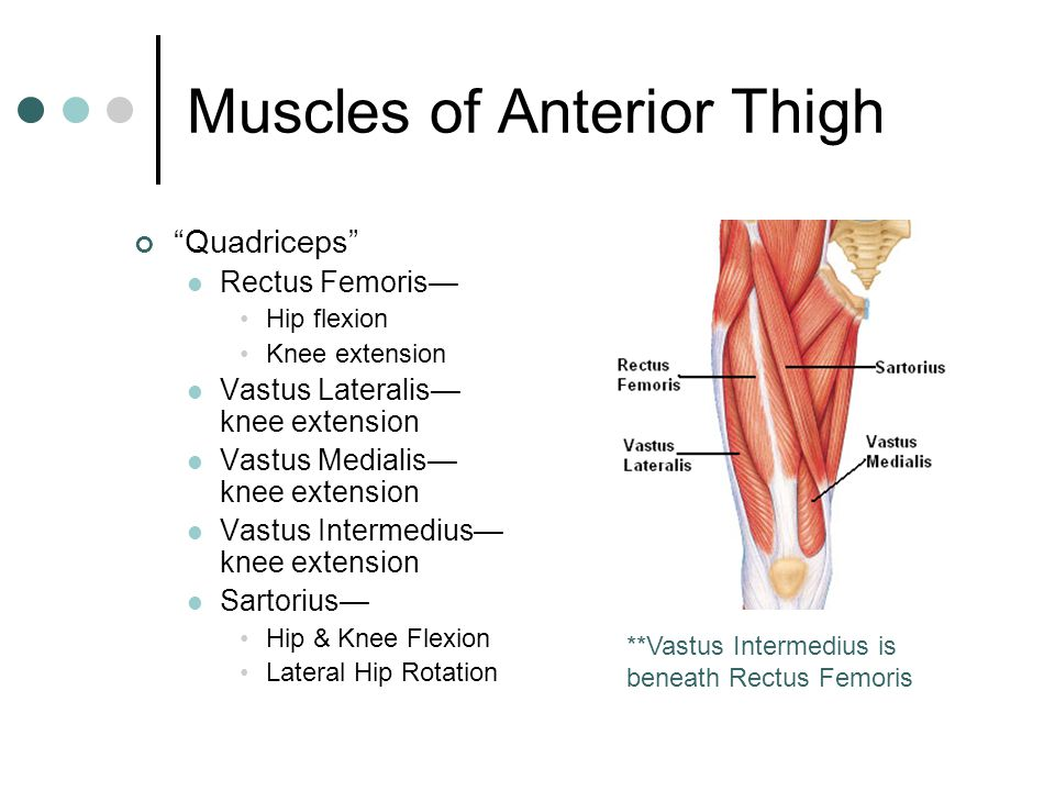 Muscular System Muscles Are Responsible For All Types Of Body