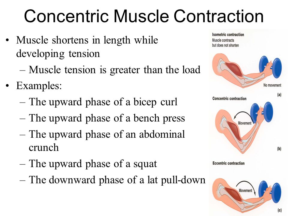 Isometric Contraction Sporting Example Muscles: Action...