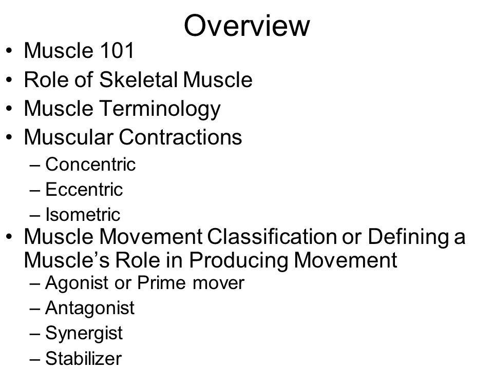 Muscles Actions Movements And Terminology Ppt Video Online Download