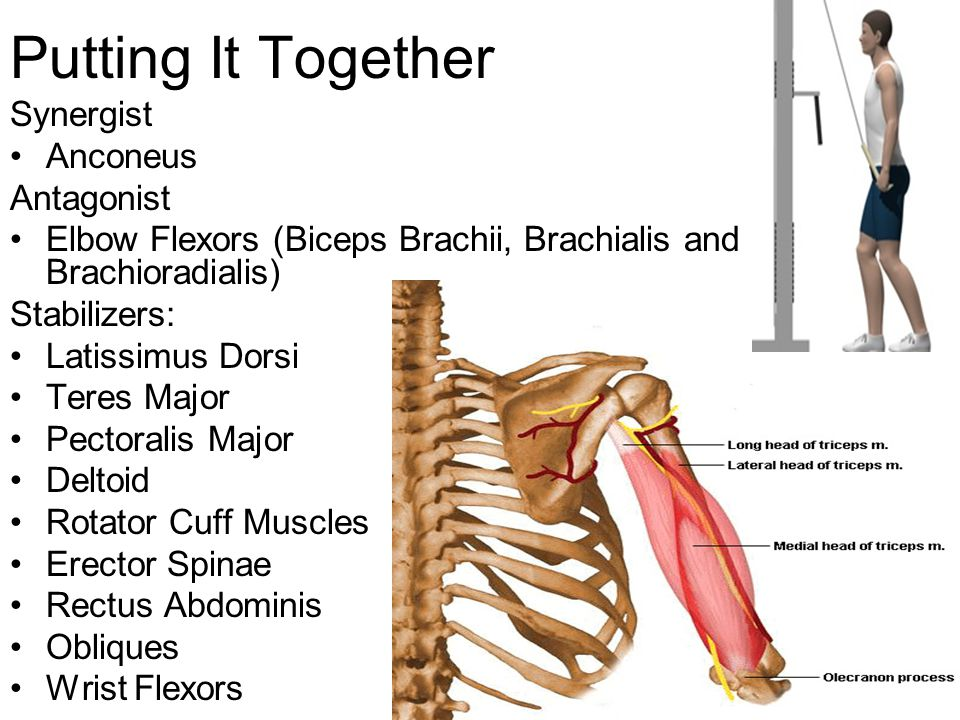 Muscles: Actions, Movements, and Terminology - ppt video online download