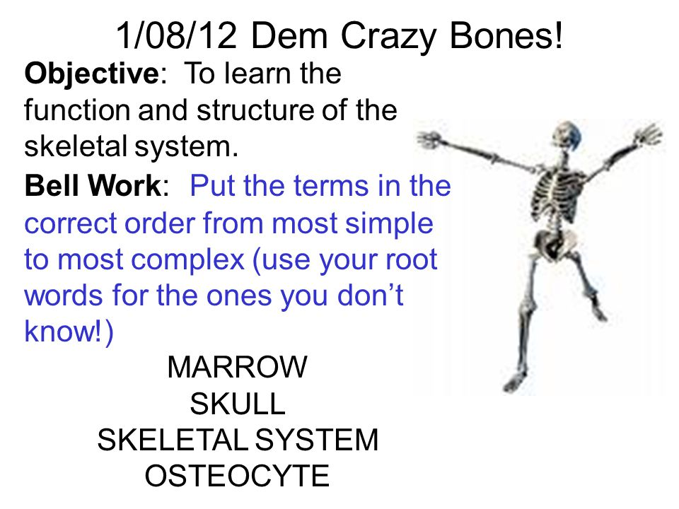 how to learn the bones fast