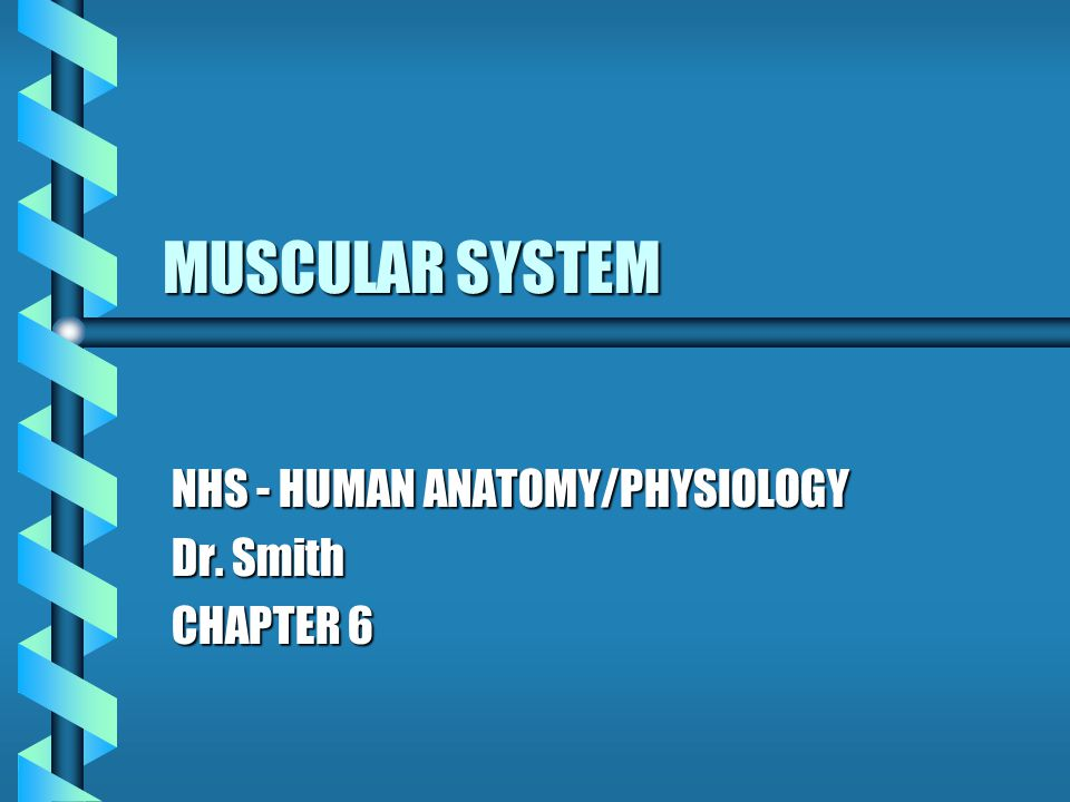 NHS - HUMAN ANATOMY/PHYSIOLOGY Dr. Smith CHAPTER 6