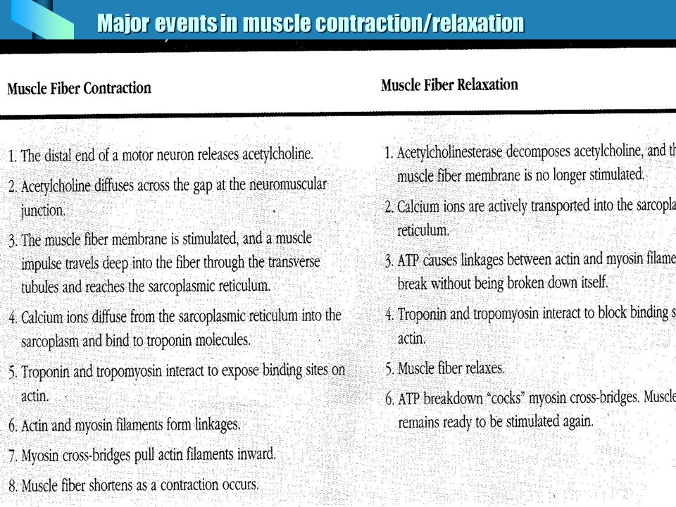Major events in muscle contraction/relaxation