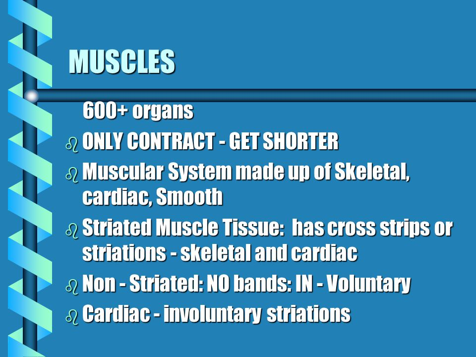 MUSCLES 600+ organs ONLY CONTRACT - GET SHORTER