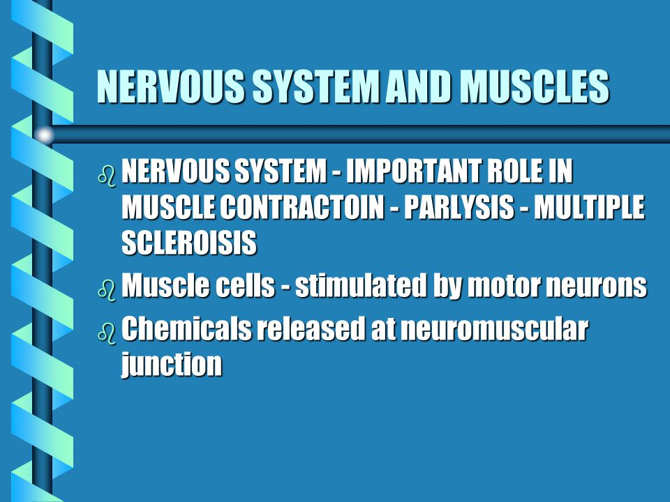 NERVOUS SYSTEM AND MUSCLES