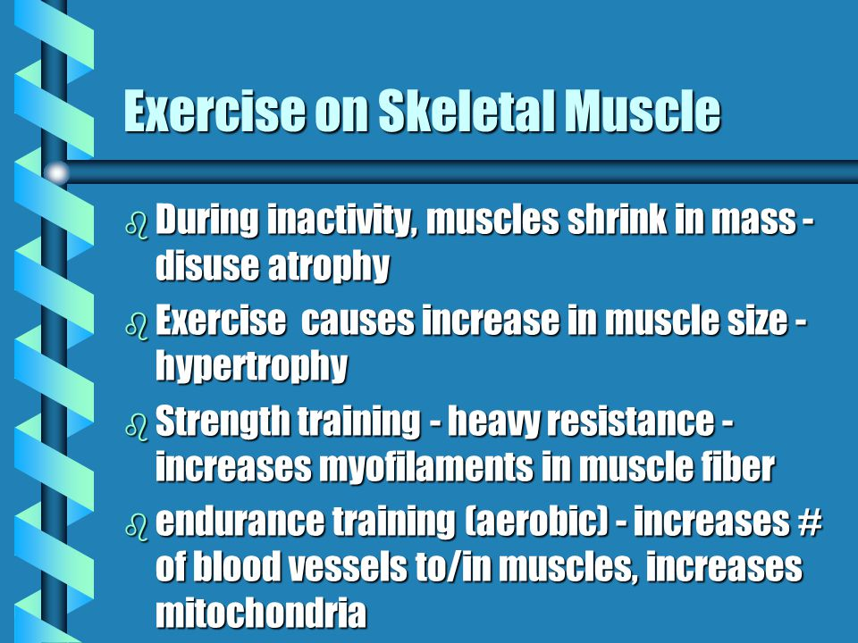 Exercise on Skeletal Muscle