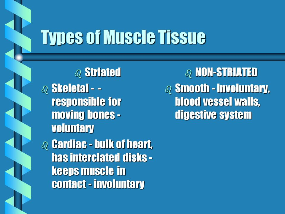 Types of Muscle Tissue Striated