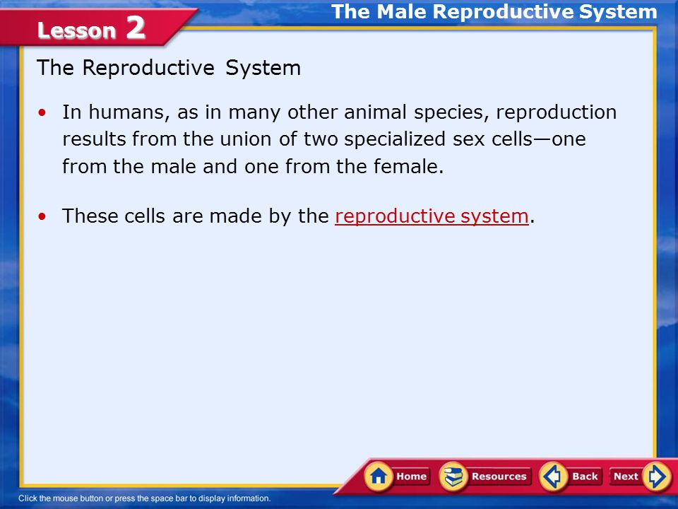 1/18/11 Male Reproductive System - ppt video online download