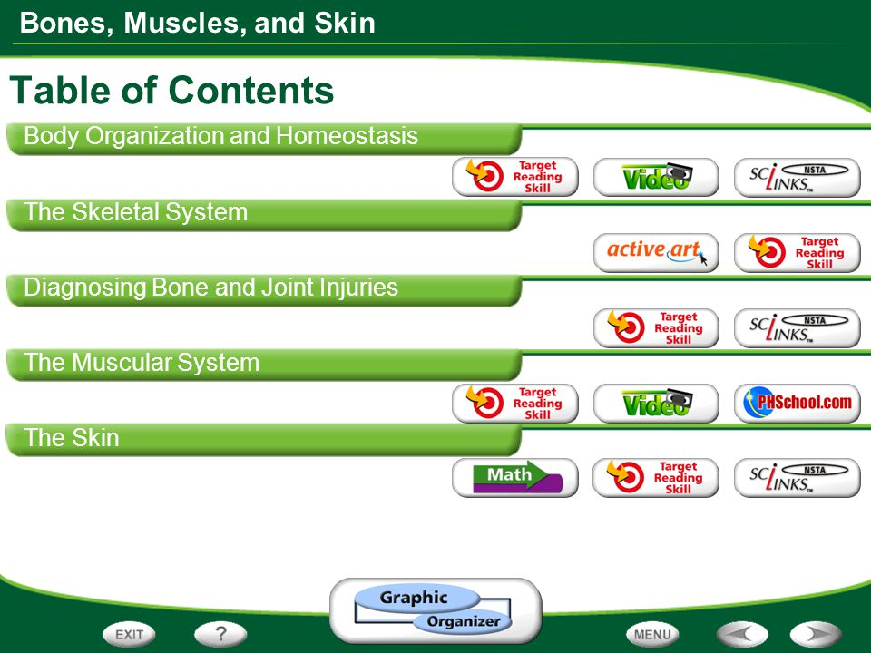 table of contents body organization and homeostasis ppt