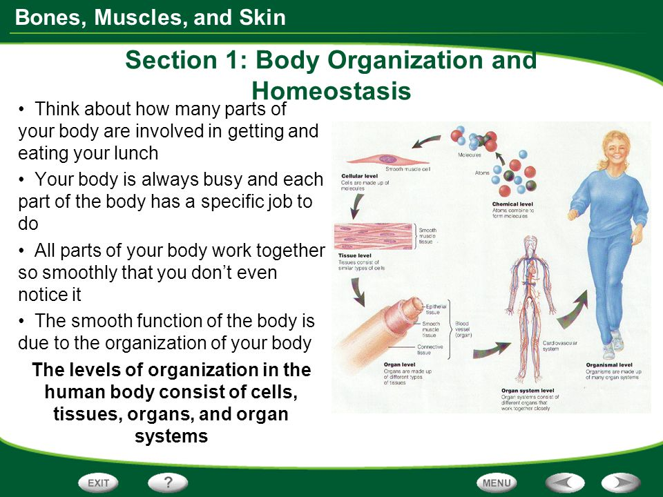 understanding the science behind homeostasis in the human body The body's endocannabinoid system (ecs) is a vital molecular system for helping maintain homeostasis—it helps cells stay in their goldilocks zone key pieces of the endocannabinoid system (ecs.