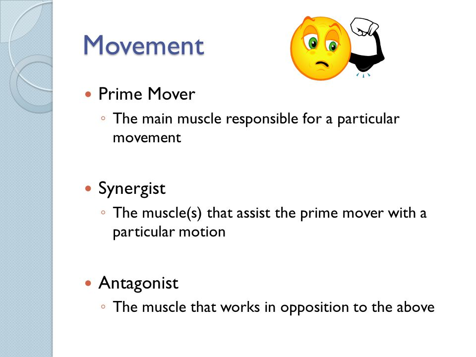 Movement Prime Mover Synergist Antagonist