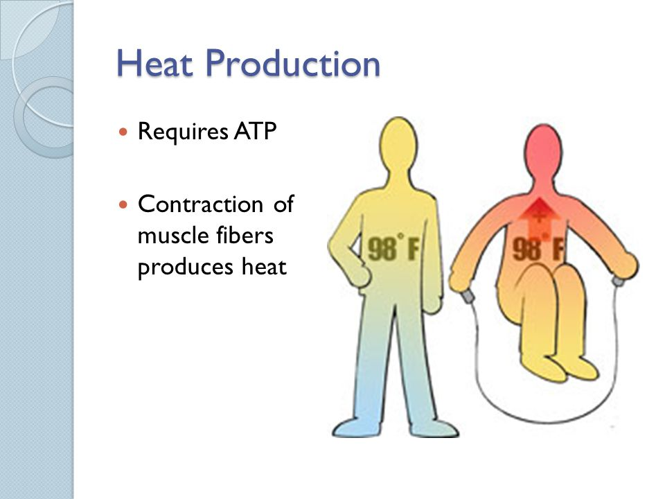 Heat Production Requires ATP