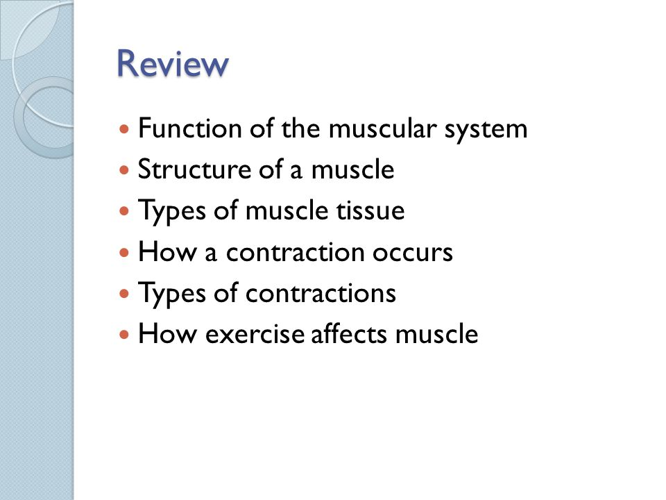Review Function of the muscular system Structure of a muscle
