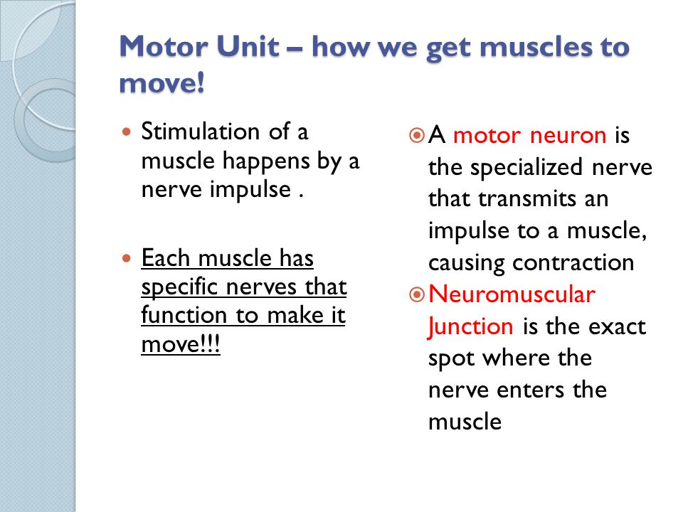 Motor Unit – how we get muscles to move!