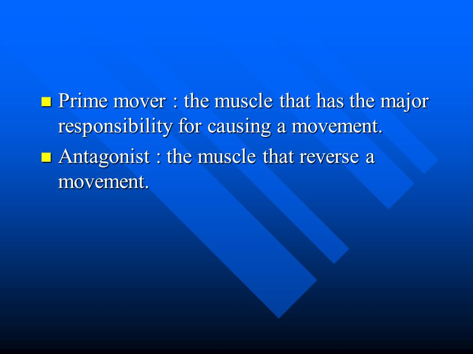 Prime mover : the muscle that has the major responsibility for causing a movement.