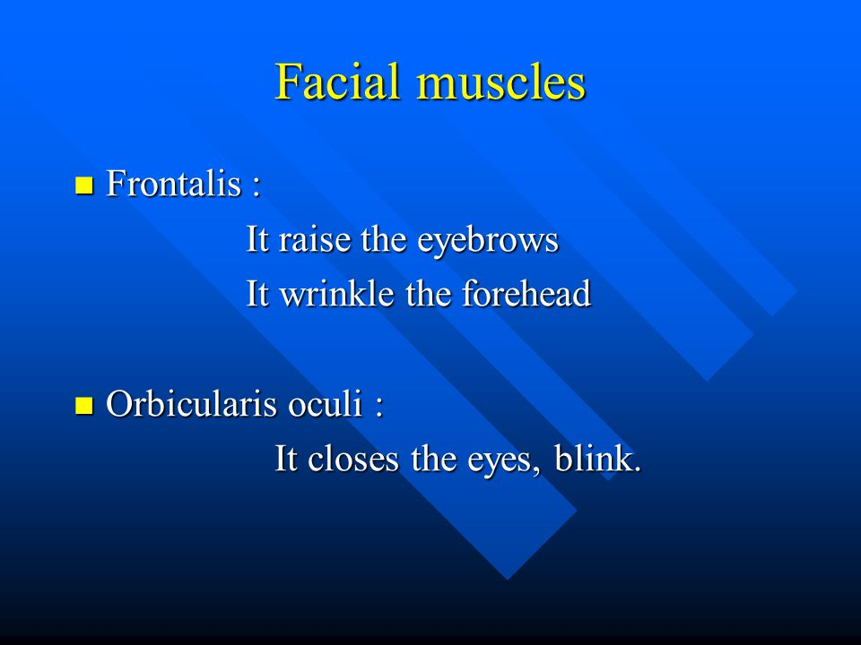 Facial muscles Frontalis : It raise the eyebrows