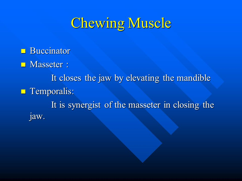Chewing Muscle Buccinator Masseter :