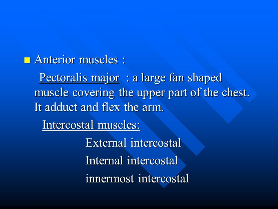 Anterior muscles : Pectoralis major : a large fan shaped muscle covering the upper part of the chest. It adduct and flex the arm.
