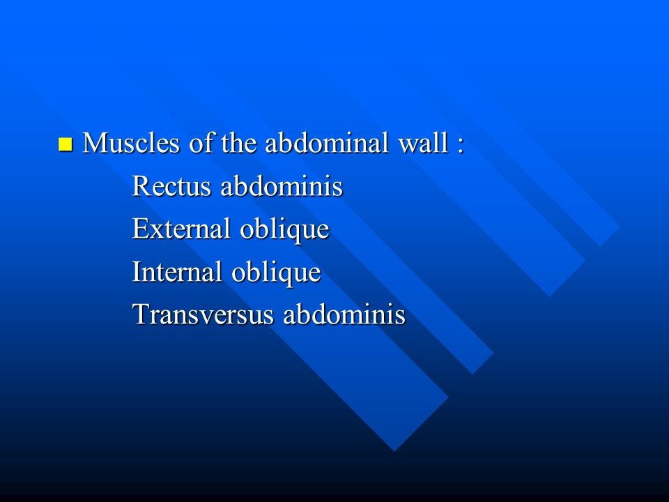 Muscles of the abdominal wall :