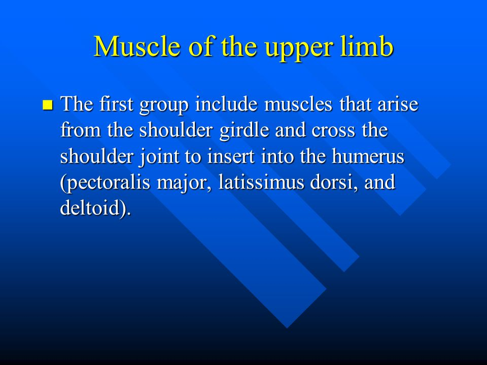Muscle of the upper limb