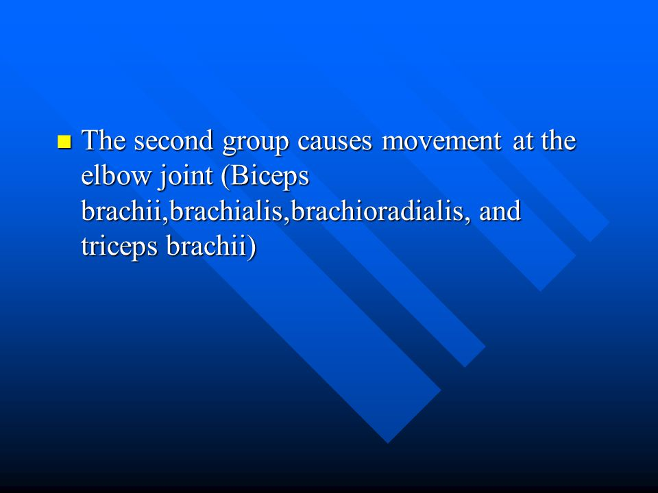 The second group causes movement at the elbow joint (Biceps brachii,brachialis,brachioradialis, and triceps brachii)