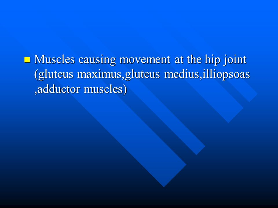 Muscles causing movement at the hip joint (gluteus maximus,gluteus medius,illiopsoas ,adductor muscles)