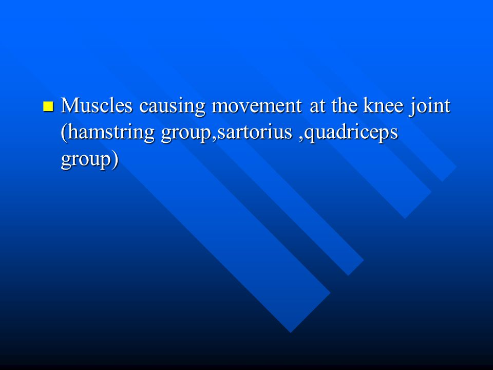 Muscles causing movement at the knee joint (hamstring group,sartorius ,quadriceps group)