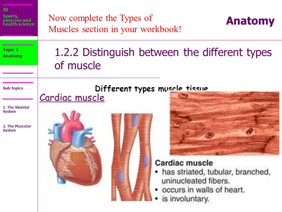 the different types of muscle biology essay The four main types of human tissue are epithelial, connective, muscle & nervous as for as similarities, each of the 4 tissue types are made up of specialized cells that are grouped together according to structure and function.
