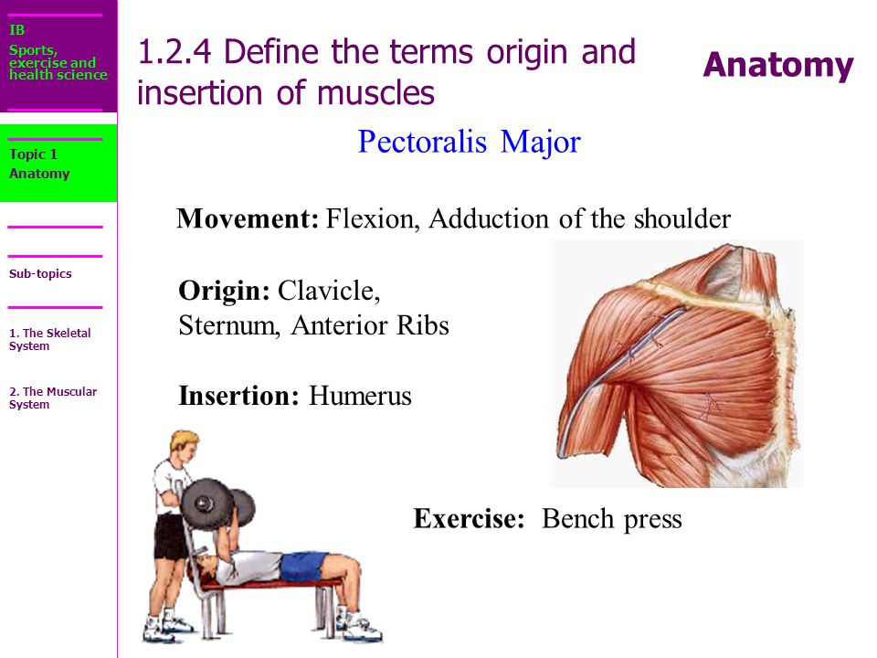 1 There Are Over 1000 Muscles In Your Body Ppt Download