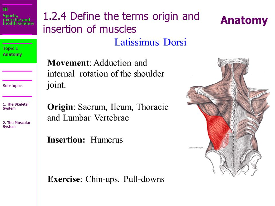 1. There are over 1,000 muscles in your body. - ppt download