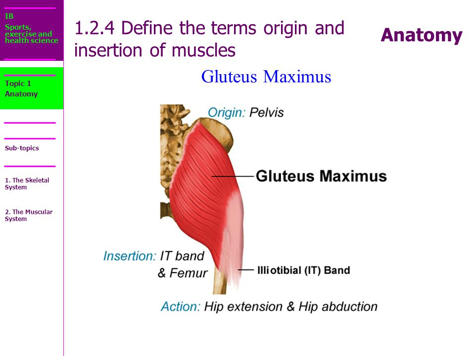 Luxury Define Extension In Anatomy Photos Anatomy And Physiology