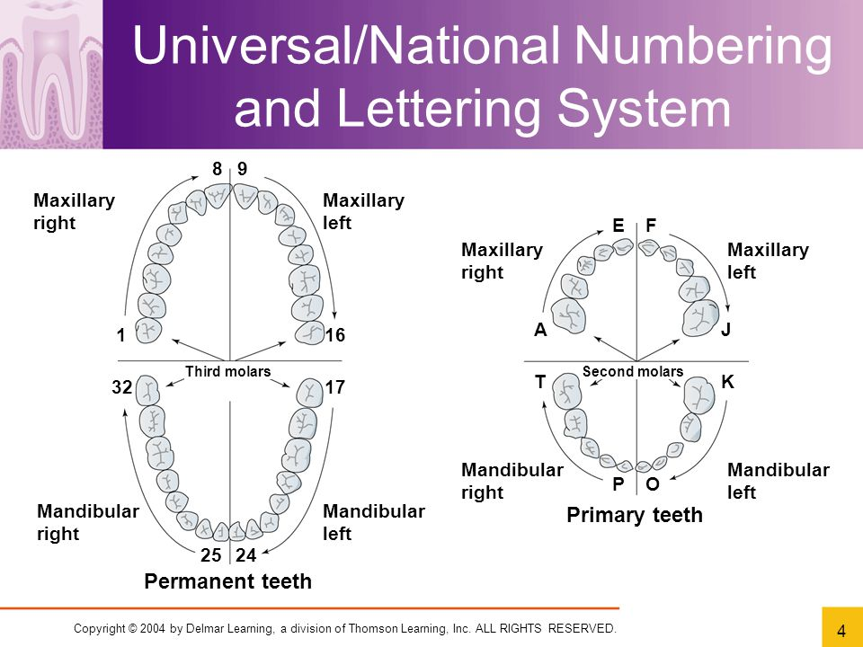 Chapter 7 dental charting ppt video online download 4 universalnational ccuart Image collections