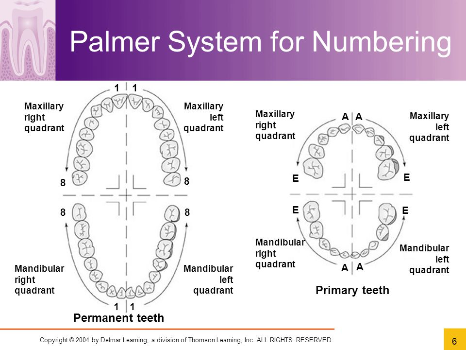 Chapter 7 dental charting ppt video online download palmer system for numbering ccuart Image collections