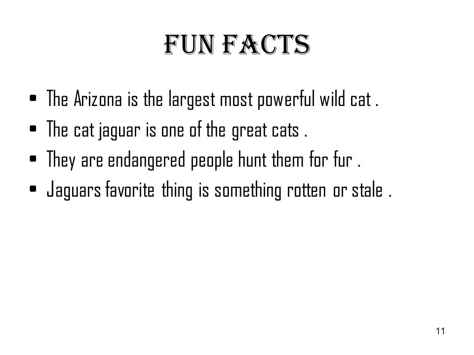 11 Fun Facts ...