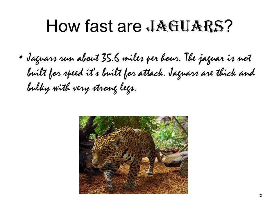 How Fast Are Jaguars