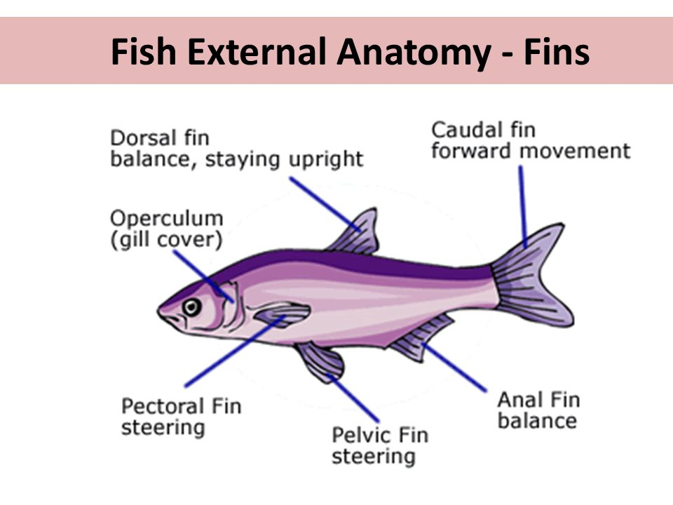 Biology of Fish. - ppt video online download