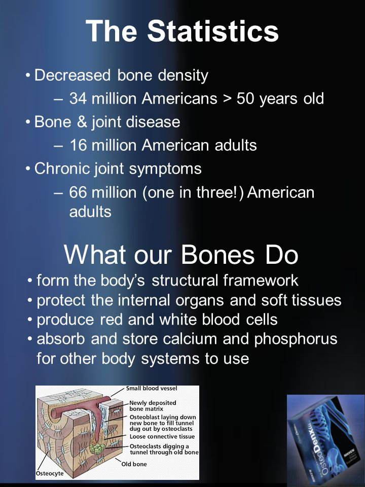 The Statistics What our Bones Do Decreased bone density
