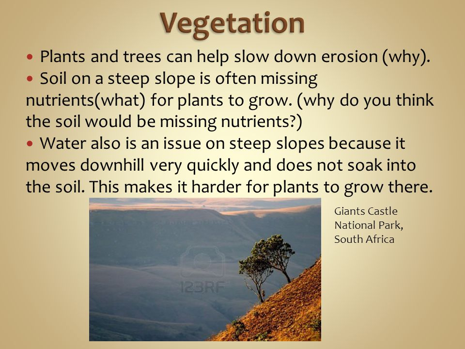 Vegetation Plants and trees can help slow down erosion (why).
